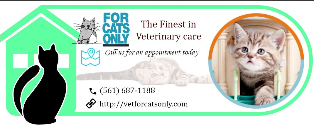 Exclusively Feline Veterinary Service in West Palm Beach.JPG
