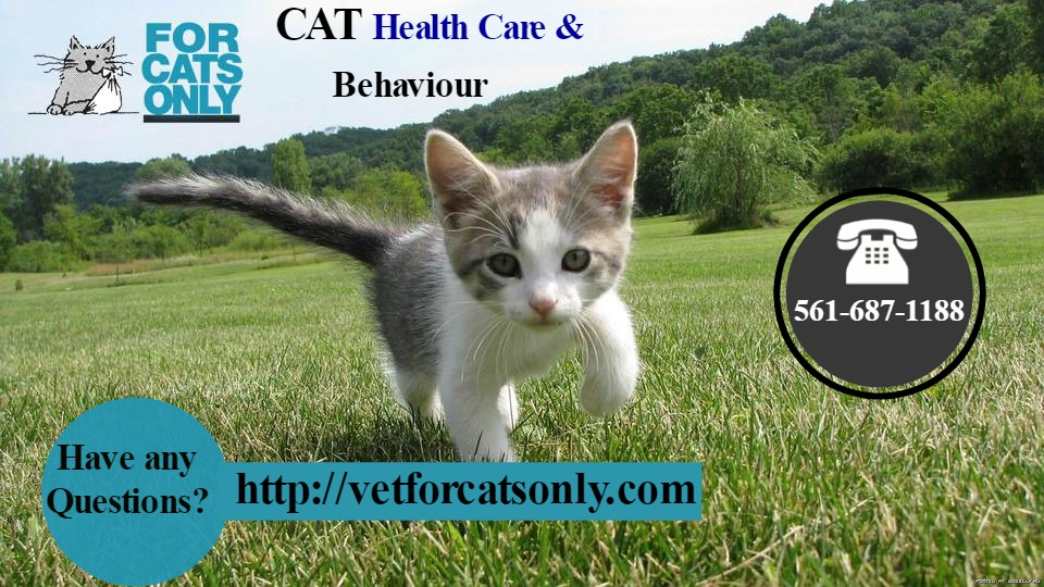 Cat Health Care And Behaviour in West Palm Beach