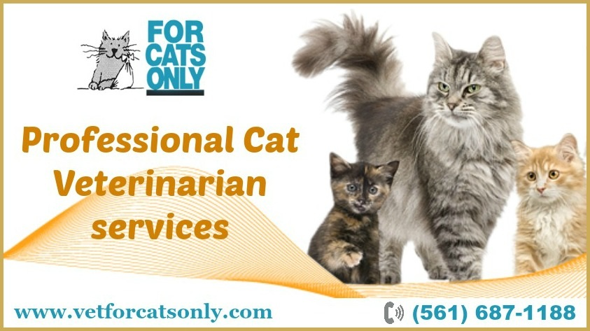 Cat Behavior Services West Palm Beach.jpg